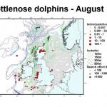 Bottlenose Dolphin - August