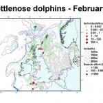Bottlenose Dolphin - February