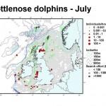 Bottlenose Dolphin - July
