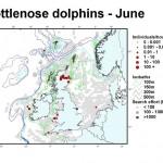 Bottlenose Dolphin - June