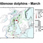 Bottlenose Dolphin - March