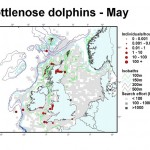 Bottlenose Dolphin - May