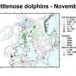 Bottlenose Dolphin - November