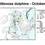 Bottlenose Dolphin - October