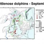 Bottlenose Dolphin - September