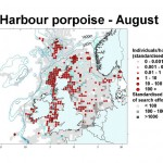 Harbour Porpoise - August