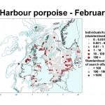Harbour Porpoise - February