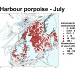 Harbour Porpoise - July
