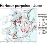 Harbour Porpoise - June