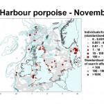 Harbour Porpoise - November