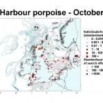 Harbour Porpoise - October