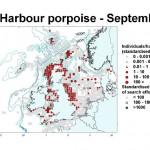 Harbour Porpoise - September