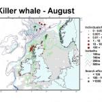 Killer Whale - August