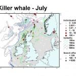Killer Whale - July