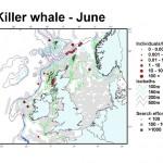 Killer Whale - June