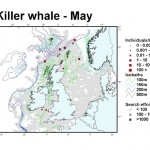 Killer Whale - May