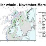 Killer Whale - November