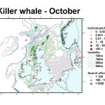 Killer Whale - October