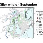 Killer Whale - September