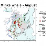 Minke whale distribution map - August