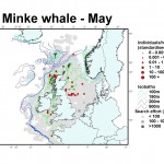 Minke whale distribution map - May