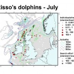 Risso's Dolphin - July