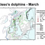 Risso's Dolphin - March