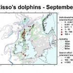 Risso's Dolphin - September