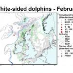 Atlantic White-sided Dolphin - February