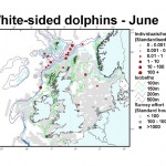 Atlantic White-sided Dolphin - June