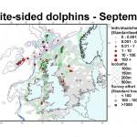 Atlantic White-Sided Dolphin - September