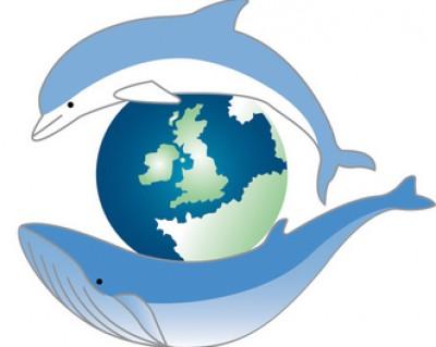 Sea Watch Foundation animal logo