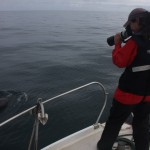 Bottlenose dolphin Survey on Dunbar Castle II
