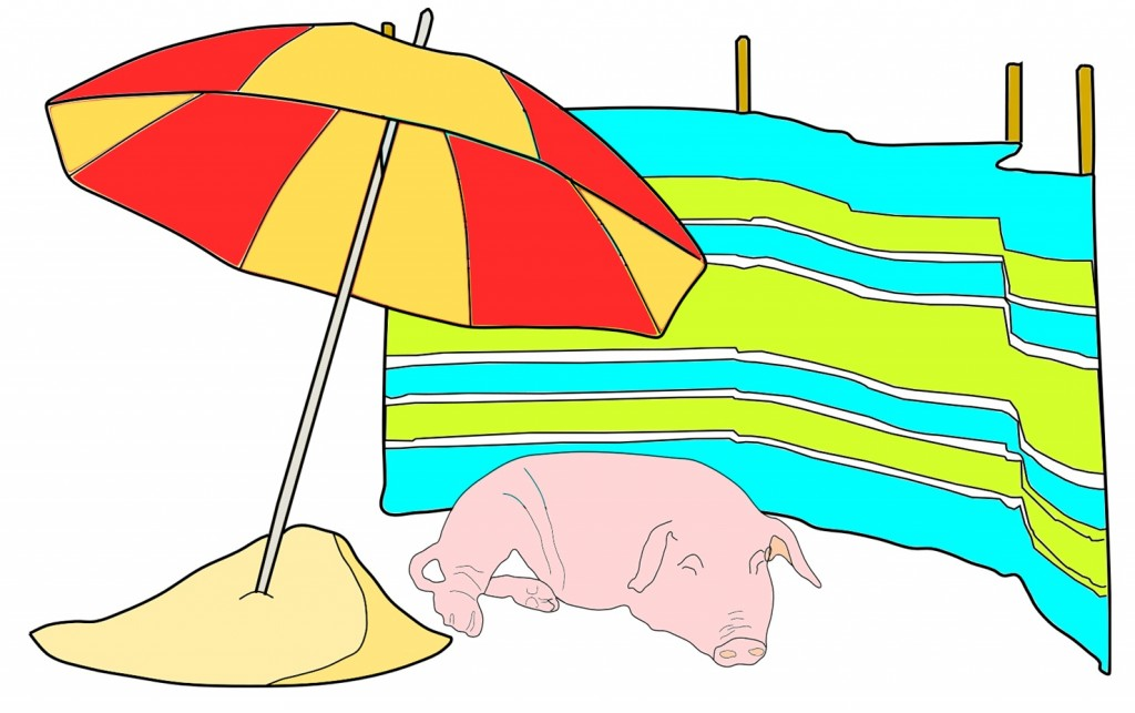Selectively bred pigs are more susceptible to sun damage... /Jaz Harker