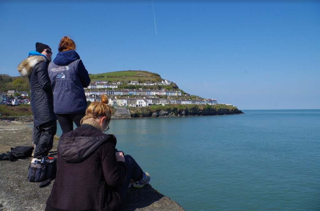 Land-watch conducted by volunteers in New Quay / Isabel Griffiths and Sea Watch Foundation