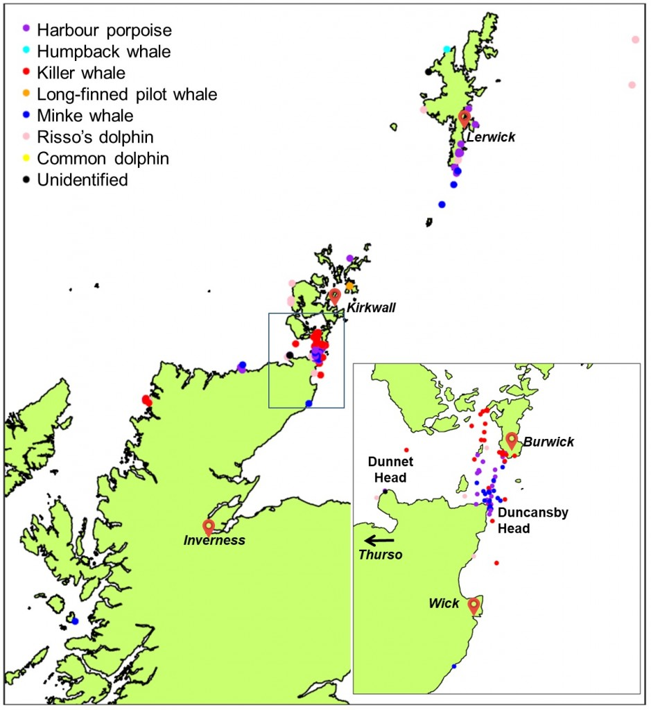 Locations of cetacean sightings collected during Orca Watch. Copyright: Sea Watch Foundation.