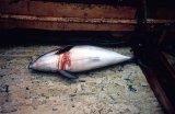 Fisheries Bycatch