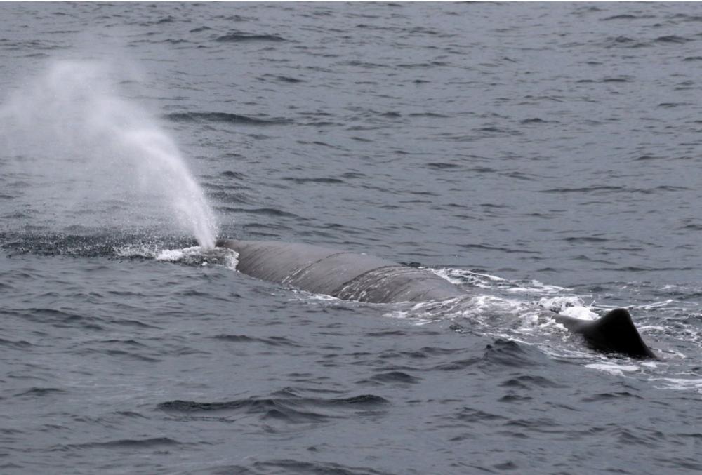 Sperm WhalePeter Evans