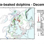 White-beaked Dolphin - December