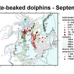 White-beaked Dolphin - September