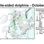 Atlantic White-sided Dolphin - October
