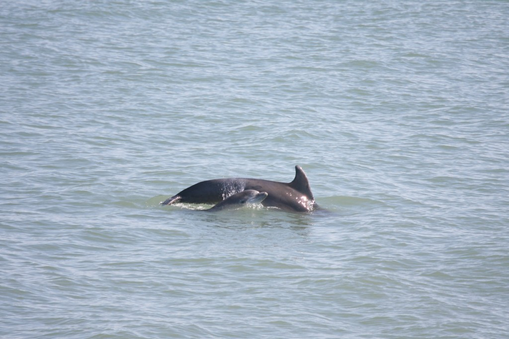 The mother and calf pair near the pier