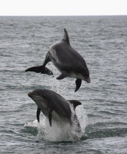 Photo: Peter Evans/ Sea Watch Foundation