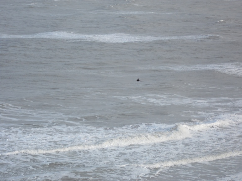 'Stormy' seeming to enjoy the stormy weather off Dolau beach, New Quay.