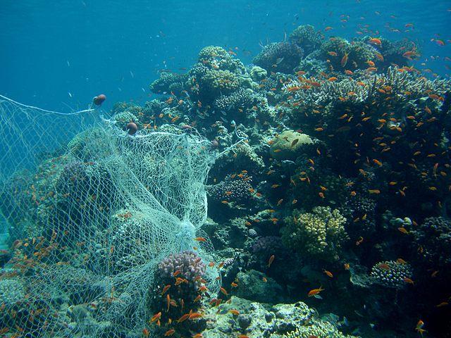 640px-CIMG2733_Fishing_Net_On_Reef_(2692835363)