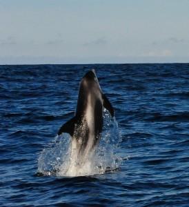 WBD_AlanLeatham_Ocean Explorer