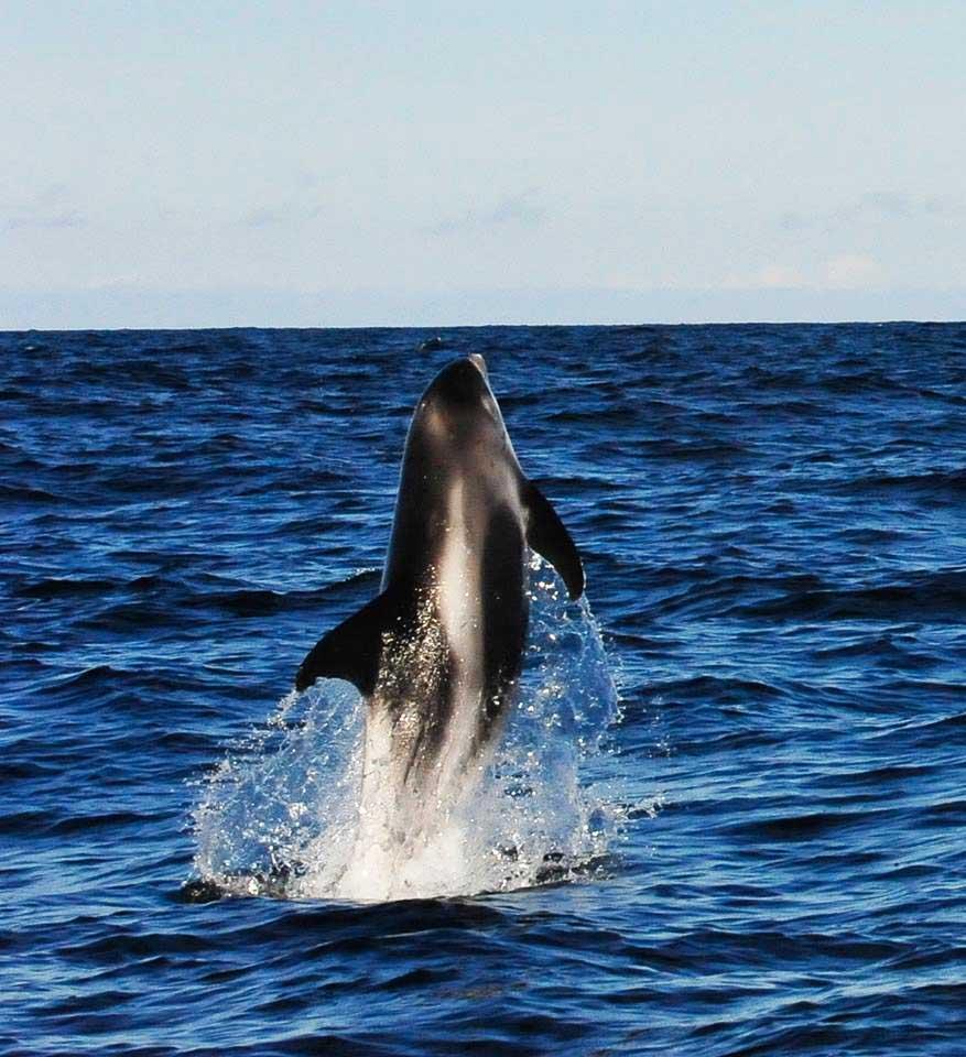 WBD_AlanLeatham_Ocean Explorer_