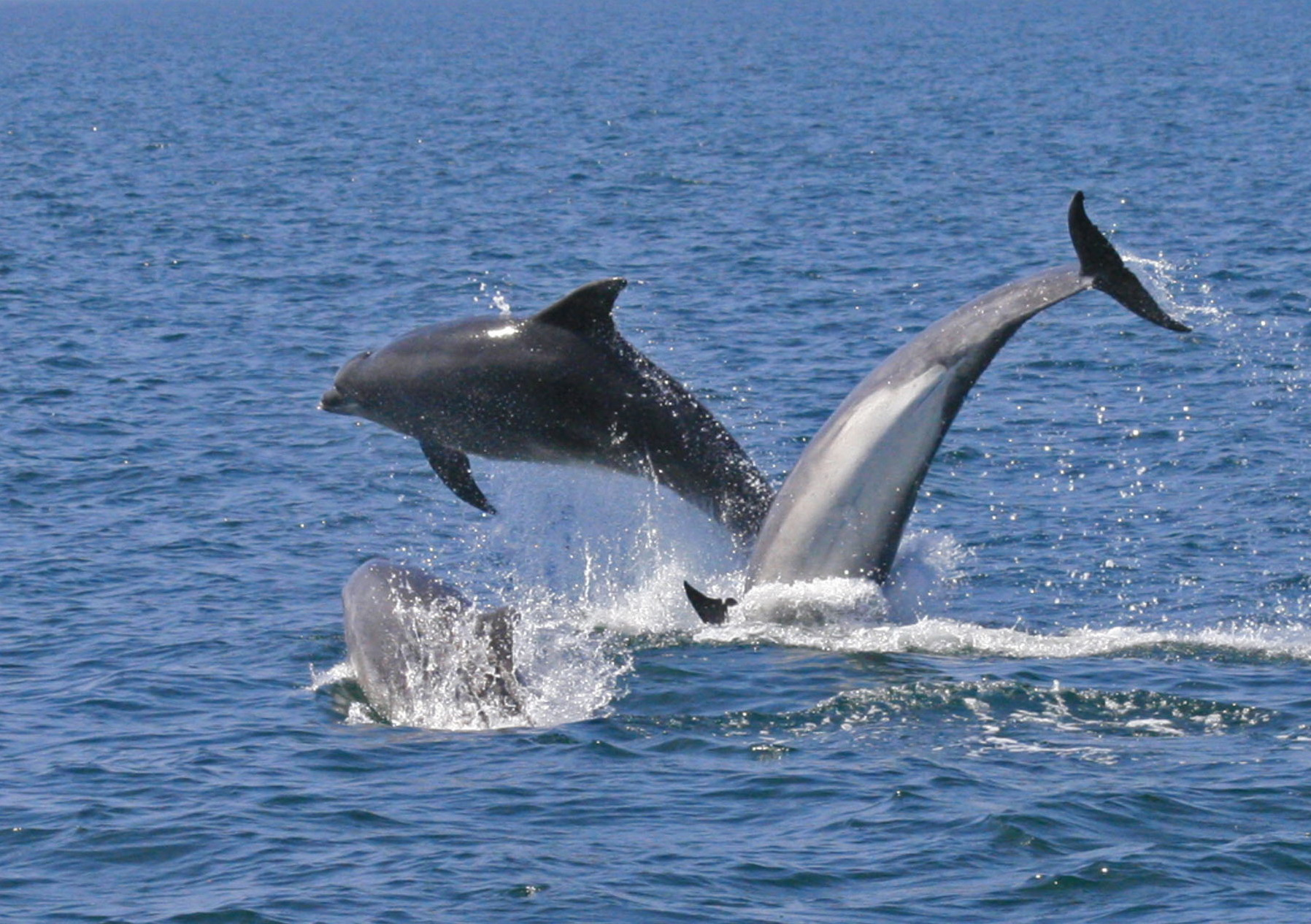 sea watch foundation free dolphin survey training in north wales
