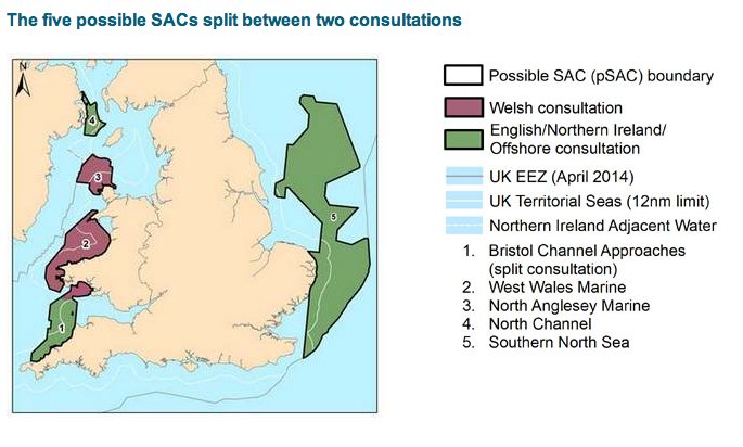 Map of Possible Porpoise SACs