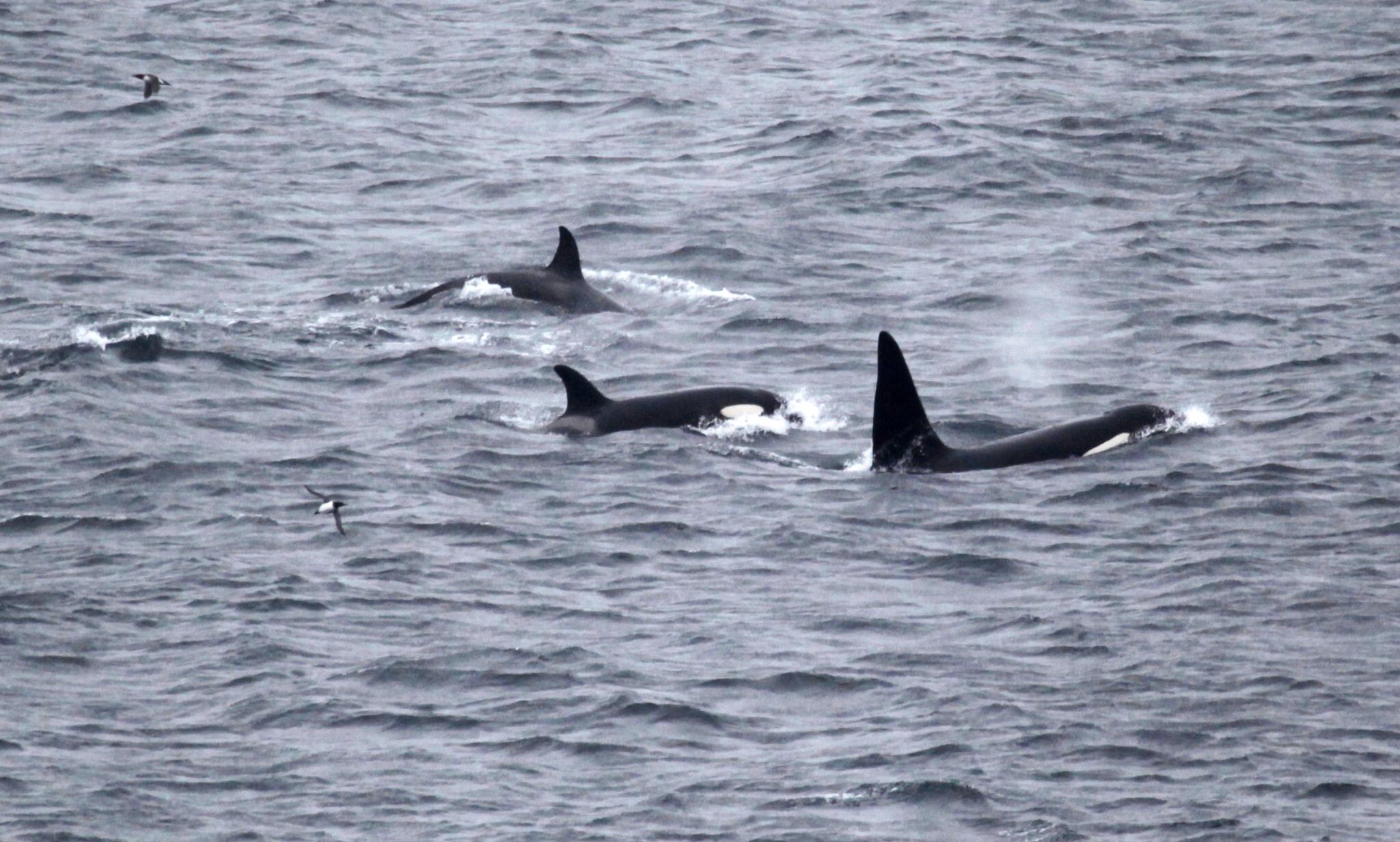 2013 Orca